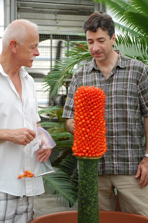 Karl Niklas and Rob Raguso inspect Cornell's Titan Arum