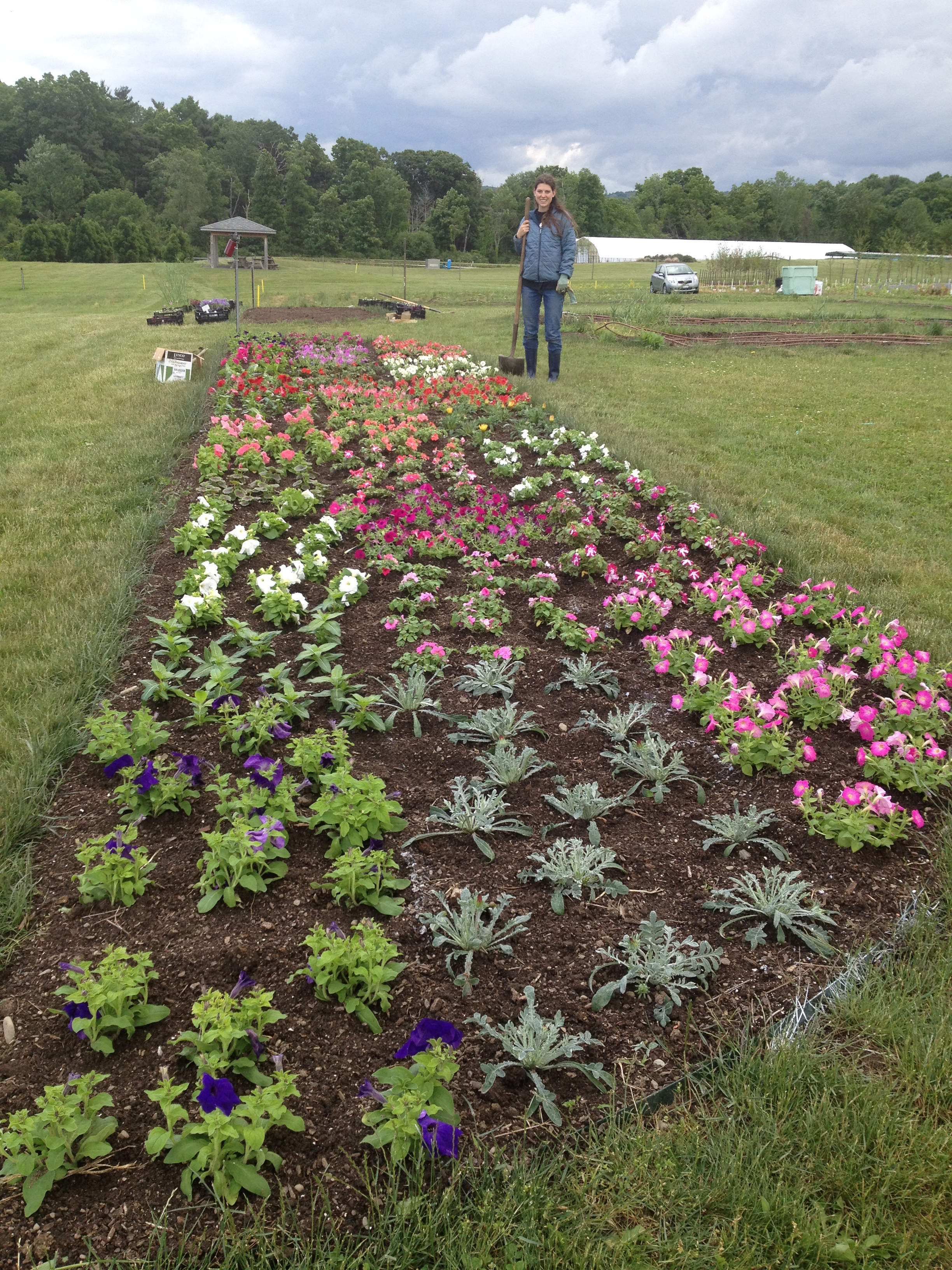 Annual flower beds the image kid has it for Grass plants for flower beds