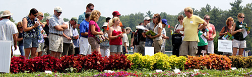 2011 annual flower trials at Bluegrass Lane