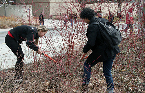 pruning shrubs on Bailey Plaza