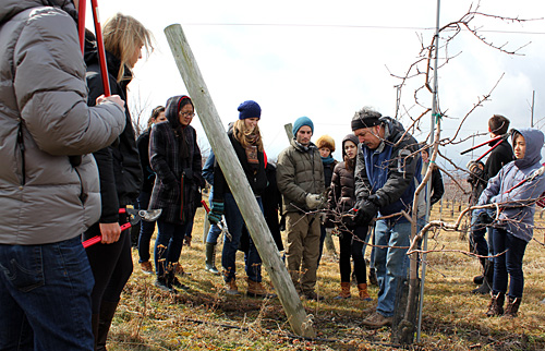 apple pruning lesson