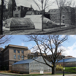 Sage Conservatory circa 1921 (top), and rendering of new L.H. Bailey Conservatory on Tower Rd.slated for completion April 2013.