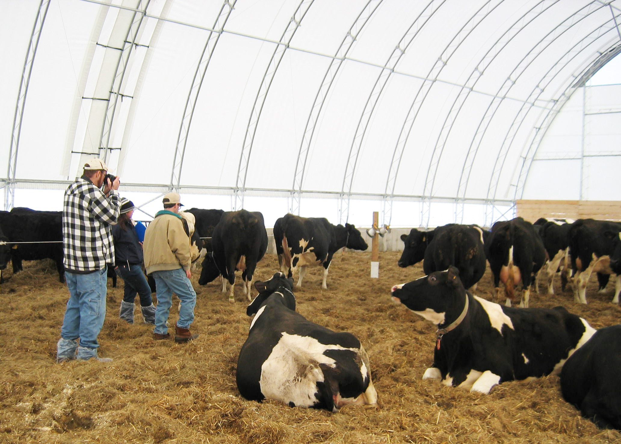 consider deep pack barns for cow comfort and manure management