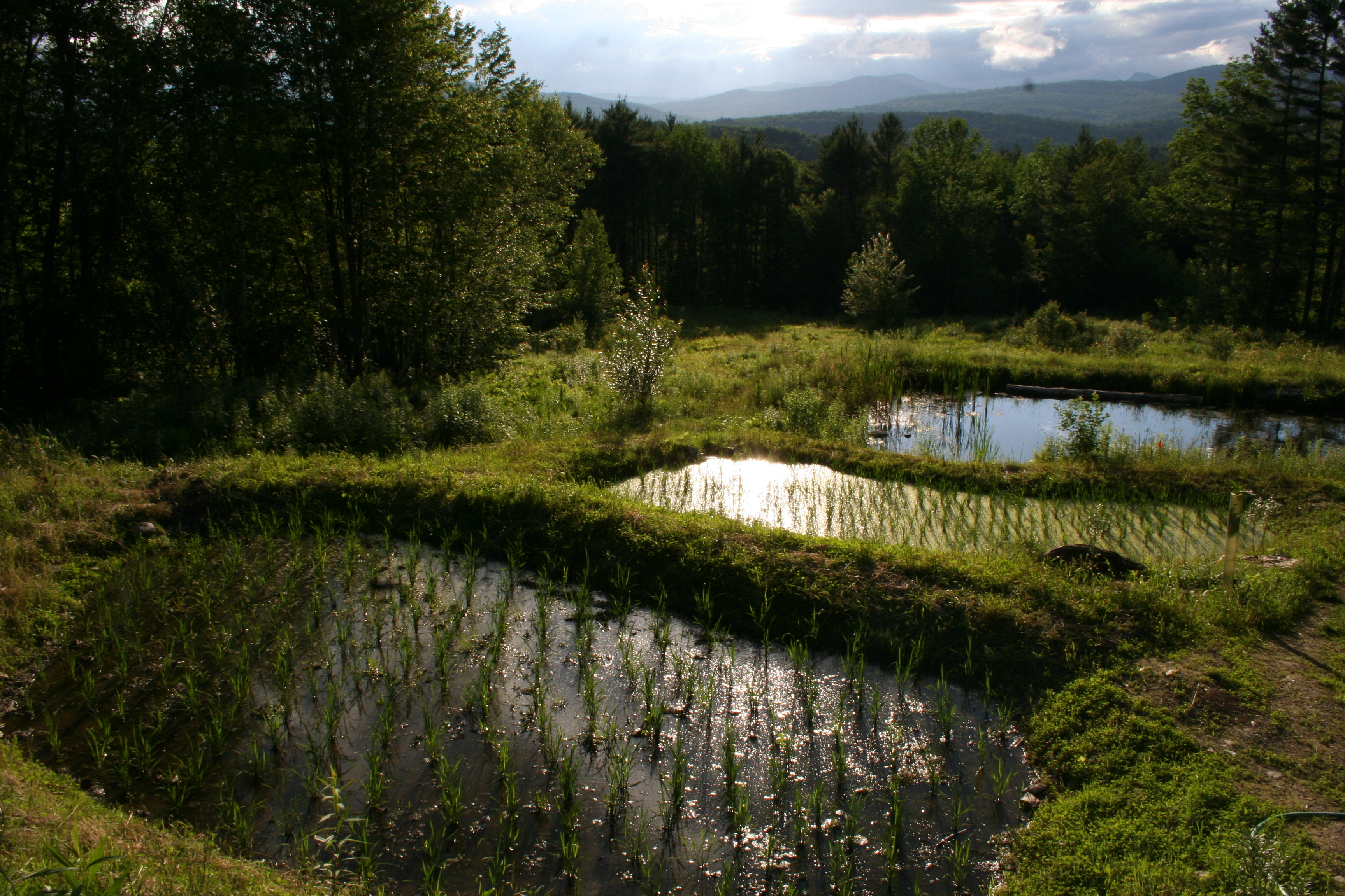 Farm Ponds: Strategies for Multiple Functions | Cornell Small ...
