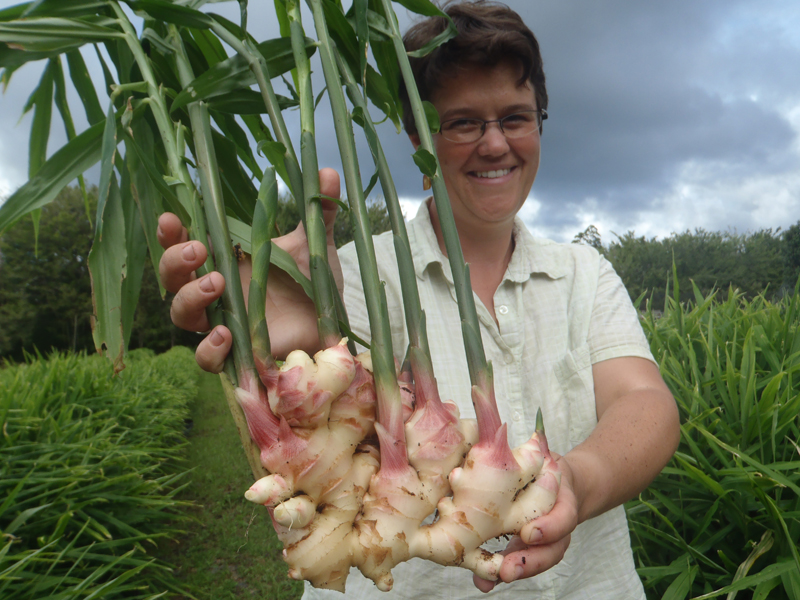 Pretty In Pink Grow Edible Ginger Cornell Small Farms