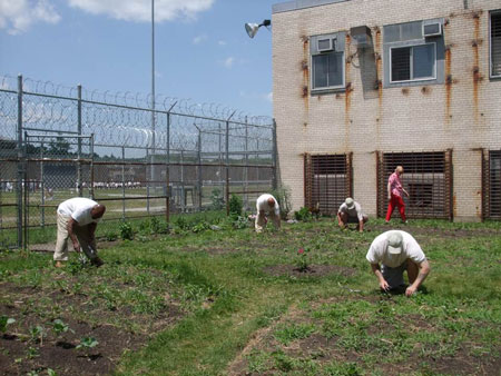 Alumna helps prison lifers brighten their space with an organic garden