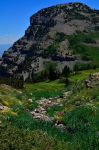 Mt. Timpanogas meadow