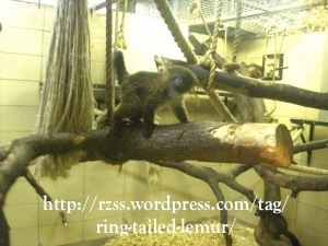 Small lemur enclosure