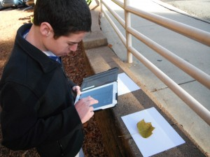 Student using LeafSnap to ID a tree