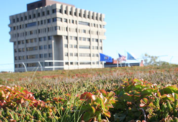 GLM Green Roof
